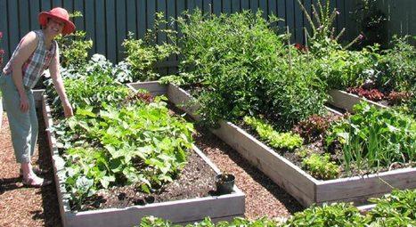 5 Secrets to a 'No-work' Garden | 100 Acre Wood | Scoop.it