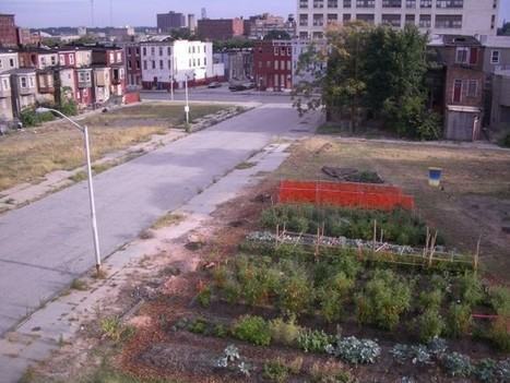 Urban Agriculture for Food Security: Good but Not Enough ... | Urban Greens Watch | Scoop.it