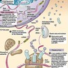 Understanding Protein Synthesis