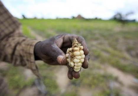 ANALYSIS - UN drive to lift up poor farmers must focus on climate - experts | Thomson Reuters Foundation | CGIAR Climate in the News | Scoop.it
