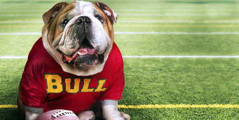 Bulldog inglese: tutte le caratteristiche di questo nobile combattente   best5.it   Vari   Scoop.it
