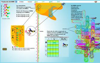 Traducción del ARN | ciència | Scoop.it