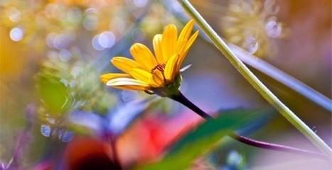 Vier een kleurrijk weekend in de tuin - DagjeWeg.nl   Tuinen   Scoop.it