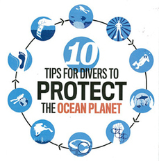10 Tips for Divers to Protect the Ocean Planet | Seahorse Project | Scoop.it
