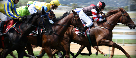 MELBOURNE CUP: THE ETHICAL FORM GUIDE | Ethics | Scoop.it