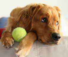 Dog Care Essentials : The Humane Society of the United States   Everyone Should Own A Pet   Scoop.it