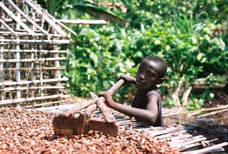 Une étude dévoile la face cachée du chocolat : entre déforestation, pollution et esclavagisme | Biodiversité | Scoop.it