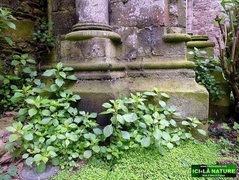 France – Brittany : Medieval Abbey of Beauport – Paimpol – 30 ... | CG22 | Scoop.it