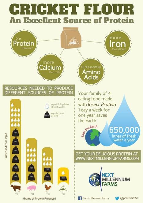 Tweet from @Protein2050 | Insect-based product and ingredients | Scoop.it