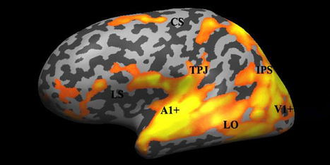 How Movies Synchronize the Brains of an Audience | Science | WIRED | Cinema Zeal | Scoop.it