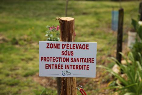 France : Malgré la découverte d'un nouveau foyer de grippe aviaire, l'Etat se veut rassurant | Agriculture en Dordogne | Scoop.it