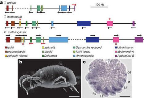 Nature: The genome of the spider mite Tetranychus urticae reveals herbivorous pest adaptations | Plant Pathogenomics | Plant health | Scoop.it