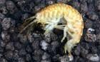 Environment Agency's 'hit list' of ten most invasive species - Telegraph | AnnBot | Scoop.it