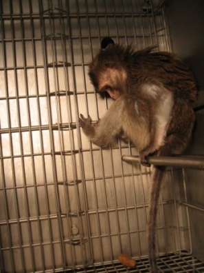Urge China Southern Airlines to Stop Flying Primates to Laboratories! | Nature Animals humankind | Scoop.it