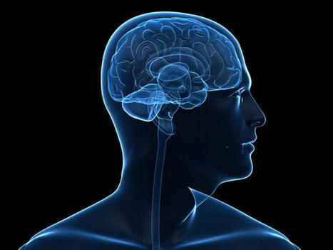 Left-brain, right-brain theory a myth, study says - CBS News   MindBrainBody   Scoop.it