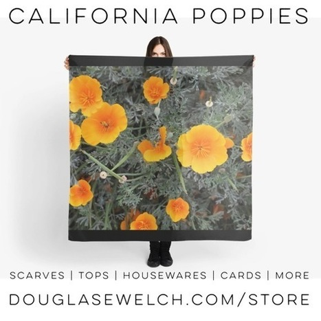 My Word with Douglas E. Welch » Get these California Poppies and more on scarves, tops, totes and much more. | Douglasewelch | Scoop.it