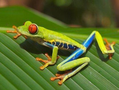 Le Costa-Rica ferme ses zoos et relâche les animaux | Mes passions natures | Scoop.it