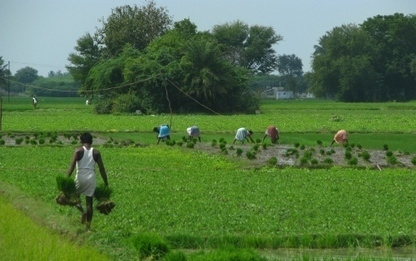 Food security can be achieved without damaging global environment | Agriculture and Farming | Scoop.it