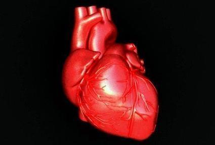 Fungsi Jantung Manusia | Medkes | Kesehatan | Scoop.it