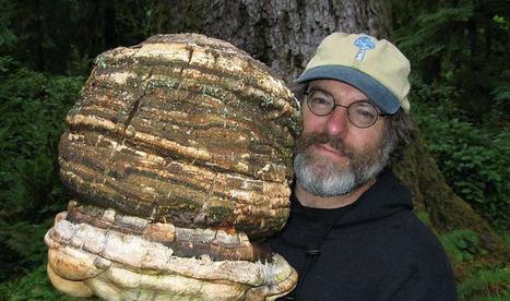 Un champignon tueur d'insectes, le brevet qui dérange Monsanto | Chimie verte et agroécologie | Scoop.it