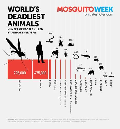 The Deadliest Animal in the World | MrsWunder's Blog | Scoop.it