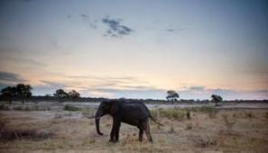 Wildlife photographer, Paul Goldstein makes an impassioned plea to the public about elephant conservation - using his majestic photo album | GarryRogers Biosphere News | Scoop.it