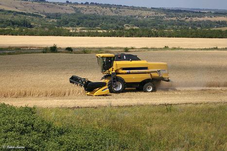 Key Russian Wheat Export Region Hit by Lack of Rain | CIBIOGEM | Scoop.it