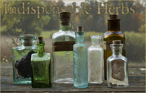 Matthew Wood: The Ten Most Indispensable Herbs in My Practice, Selections from The Earthwise Herbal   D.I.Y. Herbalism   Scoop.it