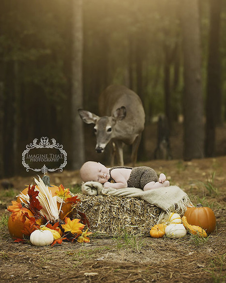 Deer Photobombs a Baby Photo Shoot, and a Magical Portrait is Born | What about? What's up? Qué pasa? | Scoop.it