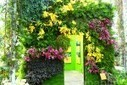 PICS: Patrick Blanc's Dazzling Vertical Garden Wonderland is Laced with 7,000 Orchids   Sustainable Futures   Scoop.it