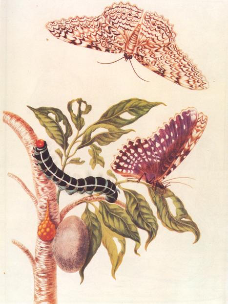 Les femmes et la science, une vieille histoire de stéréotypes, dans la Tête au carré sur France Inter   EntomoScience   Scoop.it