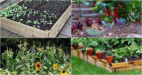 Use Natural Gardening Products   How to Grow Healthy Plants   Scoop.it