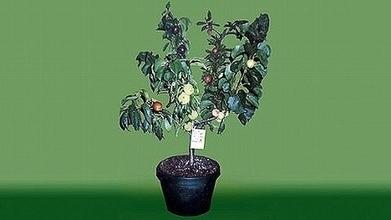 Des arbres à fruits multiples | zegreenweb | Courts-Circuits.Com | Scoop.it