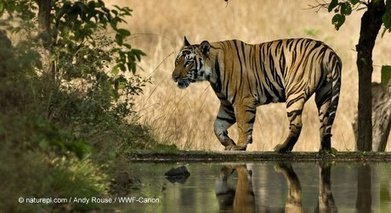 U.S. Activists: Stop Congress from Chopping Conservation Funding | World Wildlife Fund | Dagenais News Network | Scoop.it