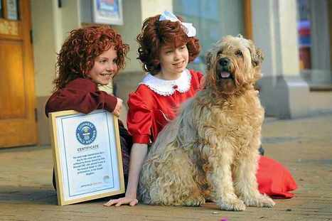 Video: Pet dog Danny clocks up world record for 1400 appearances on stage - expressandstar.com   Soft Coated Wheaten Terriers   Scoop.it