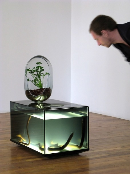 Amazing DIY Fish Tank Combined with Gardening Eco-System | Le It e Amo ✪ | Scoop.it