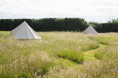 Glamping in Norfolk, England - Ling's Meadow, Bell Tent Camping | community | Scoop.it