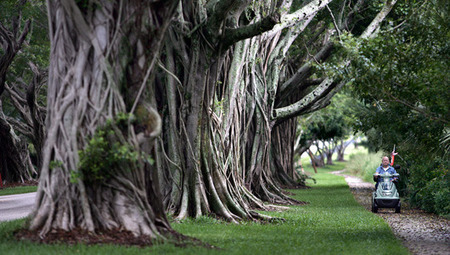 The magic of banyan trees | Sustainable Futures | Scoop.it