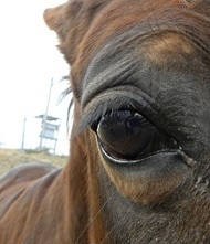 » Identification of Emotion in Equine Therapy - Equine Therapy | The Psychology of Athletics | Scoop.it