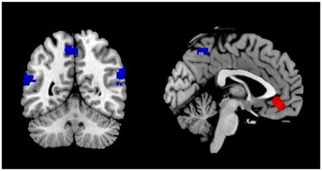 How the Brain Listens to Literature | Social Neuroscience Advances | Scoop.it