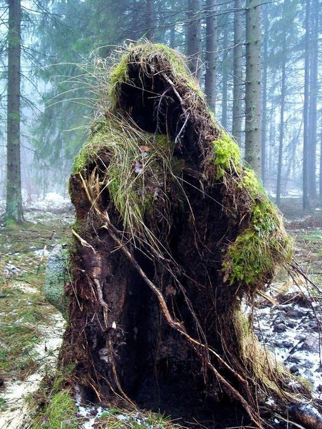 Forest Spirit - The bottom of a fallen tree, Falköping, Sweden | Harmony Nature | Scoop.it