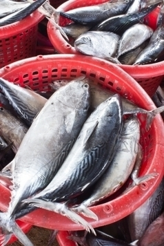 : Fisheries Commission Ignores Advice for Ending Overfishing | Farming, Forests, Water & Fishing (No Petroleum Added) | Scoop.it