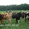 Dairy, Livestock, Animal Nutrition & Animal Husbandry