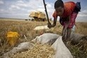 More than one trillion dollars worth of food wasted by Middle East each year   Food Security   Scoop.it