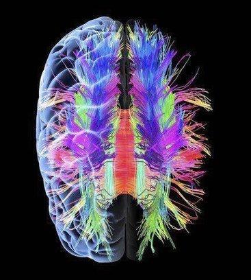 Neuroseksizm uczonych, czyli draka o płeć mózgu | Psychologia | Scoop.it