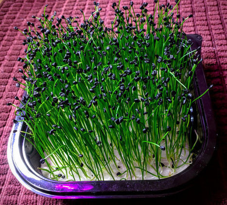 Starter Size MicroFarm, Choose from Variety of Wonderful Micro Herbs/Greens Single Crop Fits Countertop Units | Vertical Farm - Food Factory | Scoop.it