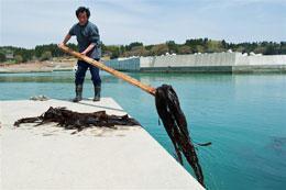 [Eng] La faune menacée par la radioactivité | Nature News | Japon : séisme, tsunami & conséquences | Scoop.it
