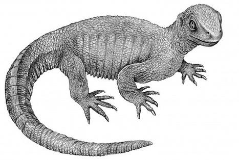 Key Link in Turtle Evolution discovered | Milhares de milhões de anos... a mesma Terra ! | Scoop.it