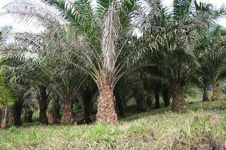 Unilever Reaches Sustainable Palm Oil Goal Three Years Early | Business & Sustainability | Scoop.it