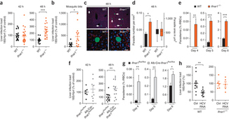 Host-cell sensors for Plasmodium activate innate immunity against liver-stage infection : Nature Medicine : Nature Publishing Group   Science & Knowledge   Scoop.it